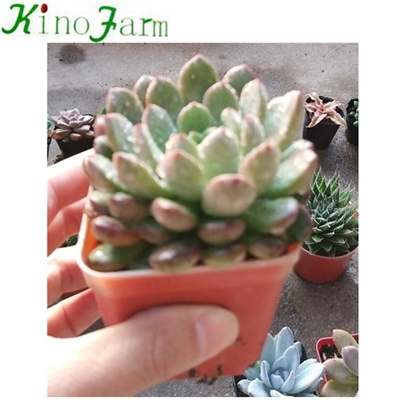 Indoor Succulent Plants